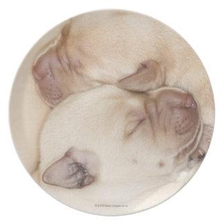 Yellow Labrador Retriever puppies, 10 days old Plate