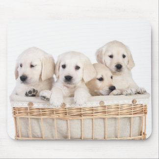 Yellow Labrador Retriever Puppies Mousepad