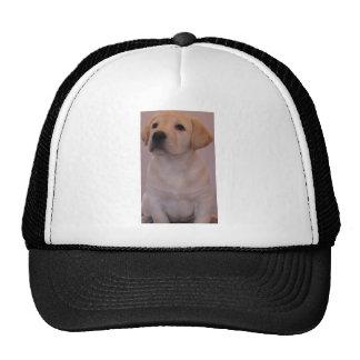 Yellow Labrador Retriever Puppy Cap