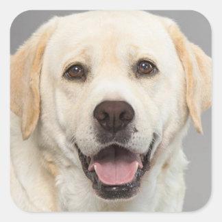Yellow Labrador Retriever Puppy Dog Sticker