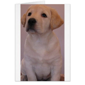 Yellow Labrador Retriever Puppy Greeting Card