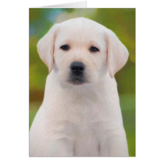 Yellow Labrador Retriever Puppy Greeting Cards