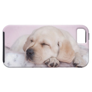 Yellow labrador retriever puppy iPhone 5 cover