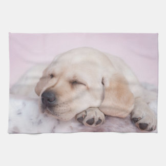 Yellow labrador retriever puppy towels