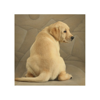 Yellow Labrador Retriever Puppy Wood Wall Art