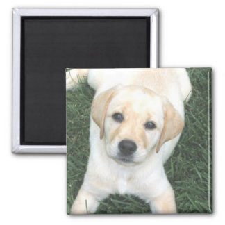 Yellow Labrador Retriever Refrigerator Magnet