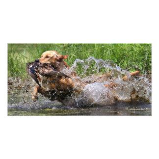 Yellow Labrador Retriever with duck photo card