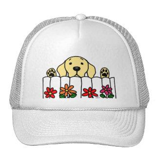 Yellow Labrador watching you Cap