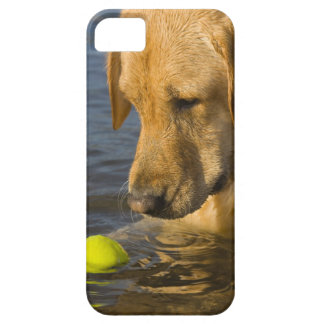 Yellow labrador with a tennis ball in the water iPhone 5 case