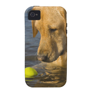 Yellow labrador with a tennis ball in the water Case-Mate iPhone 4 cases