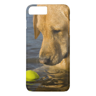 Yellow labrador with a tennis ball in the water iPhone 8 plus/7 plus case