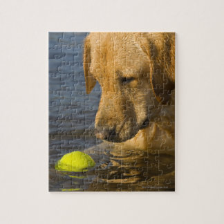 Yellow labrador with a tennis ball in the water jigsaw puzzle