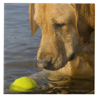 Yellow labrador with a tennis ball in the water tile
