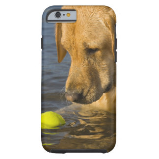 Yellow labrador with a tennis ball in the water tough iPhone 6 case