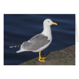 Yellow-Legged Gull Card