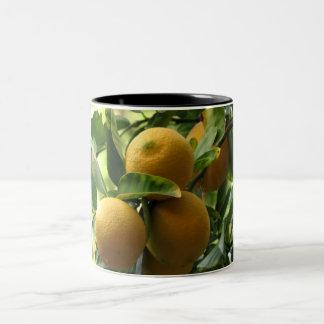 Yellow Lemons On The Tree Two-Tone Coffee Mug