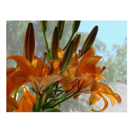 Yellow lilies postcard