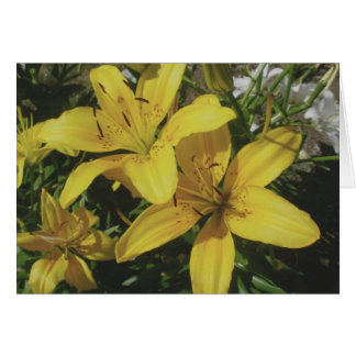 Yellow Lillies Note Card