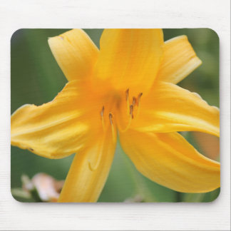yellow lilly mouse pad