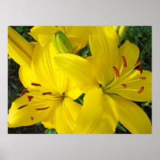 Yellow Lily Flowers art prints Christmas gifts Print