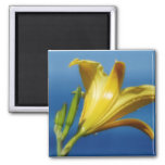 Yellow Lily Magnet