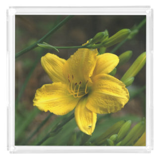 Yellow Lily, Perfume Tray.