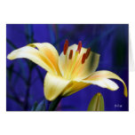 Yellow Lily, S Cyr Greeting Cards