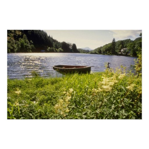 yellow Loch Ard, Trossachs flowers Posters