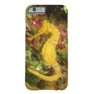 Yellow longsnout seahorse barely there iPhone 6 case