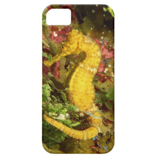 Yellow longsnout seahorse iPhone 5 cases