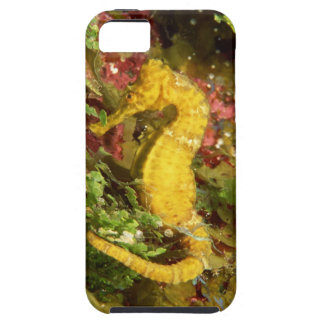 Yellow longsnout seahorse iPhone 5 cover