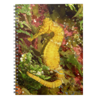 Yellow longsnout seahorse spiral notebooks