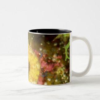 Yellow longsnout seahorse Two-Tone coffee mug
