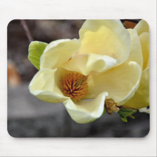 Yellow Magnolia Flower Mouse Pad