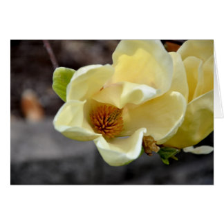 Yellow Magnolia Flower Note Card