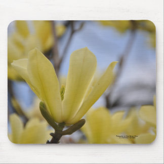 Yellow Magnolia Tree Mouse Pad