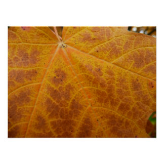 Yellow Maple Leaf Autumn Macro Photography Poster