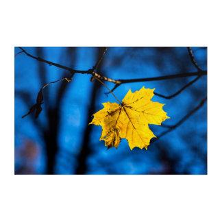 Yellow Maple Leaf On Blue Acrylic Wall Art
