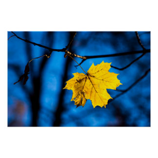 Yellow Maple Leaf On Blue Poster