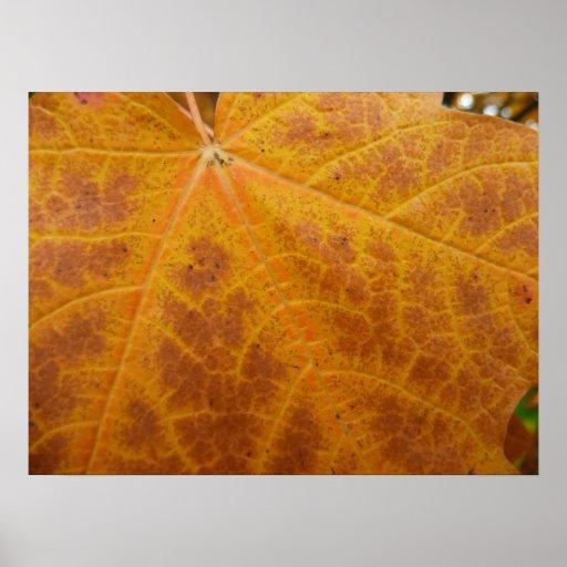 Yellow Maple Leaf Print