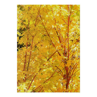 Yellow Maple Leaves Poster