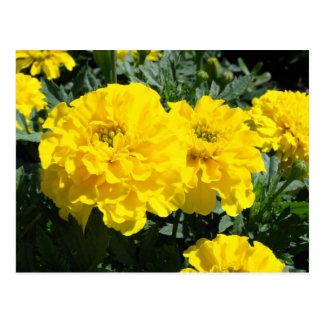Yellow Marigold Flowers Postcard