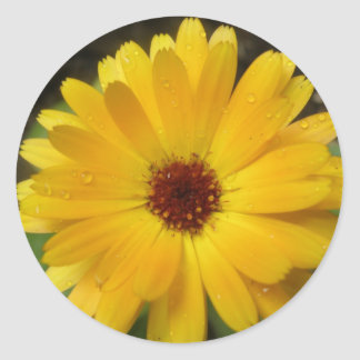 Yellow Marigold Macro Stickers