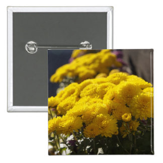 Yellow marigolds bask in sunlight 15 cm square badge
