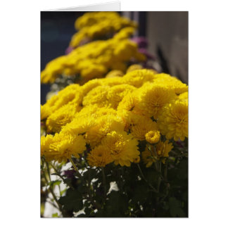 Yellow marigolds bask in sunlight card