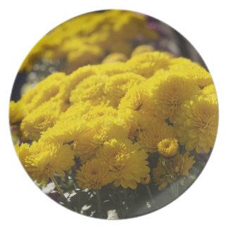 Yellow marigolds bask in sunlight dinner plates