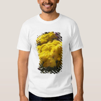 Yellow marigolds bask in sunlight t shirts