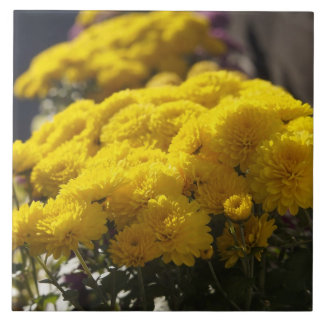 Yellow marigolds bask in sunlight large square tile