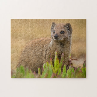 Yellow Mongoose Juvenile Amongst Figs, De Hoop Jigsaw Puzzle