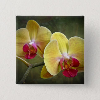 Yellow Moth Orchids - Phalaenopsis 15 Cm Square Badge